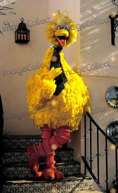Big Bird Photo - Big Bird Goes Hollywood Photo Jeff Slocomb  Globe Photos Inc 1985 1970sretro