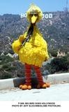Big Bird Photo 3