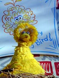 Big Bird Photo 3