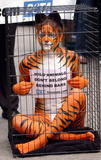 AMY JANNETTE Photo - Amy Jannette her nearly-nude body paint helping with PETA