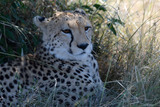 CHEETAH CUB Photo 3