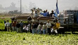 President Ronald Reagan Photo - FARMWORKERS SALUTE THE HEARSE -The flag draped casket of former president Ronald Reagan is carried in the hearse for transport to the Naval Base Ventura County at Point Mugu from the Ronald Reagan Presidential Library and then flown to Washington DC for the state funeralMOORPARK CA -06092004 -PHOTO BY POOLGLOBE PHOTOS INC2004K37630NP